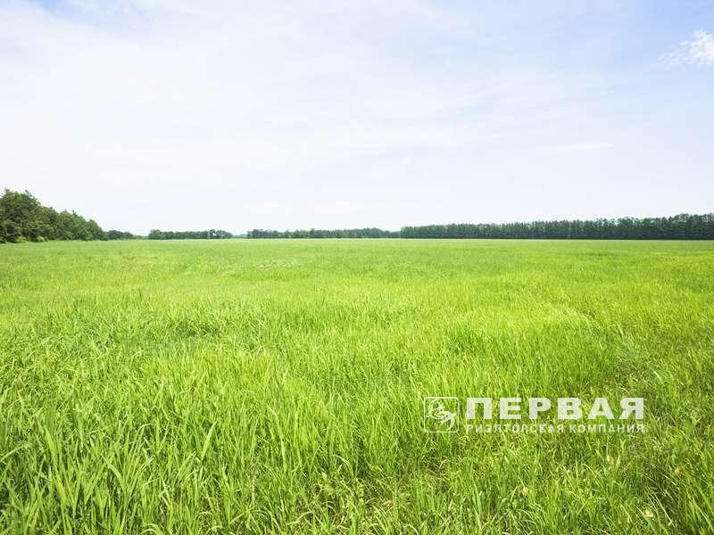 Plot near the forest and lake, Dachne